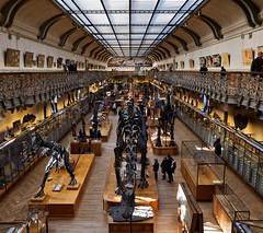 Consigne bagage Musée d'histoire naturelle de Lille